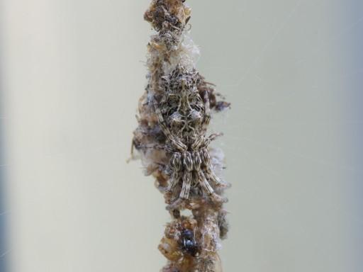 ゴミグモ_11072