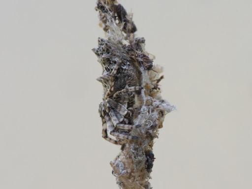 ゴミグモ_11074