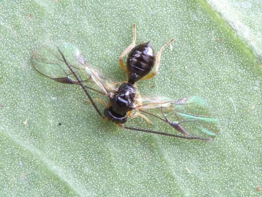 ハチの仲間_1012191