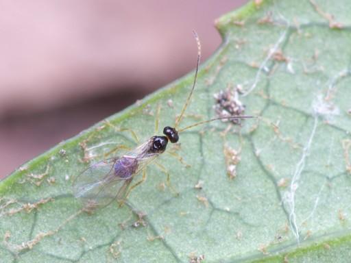 ハチの仲間2_1101161
