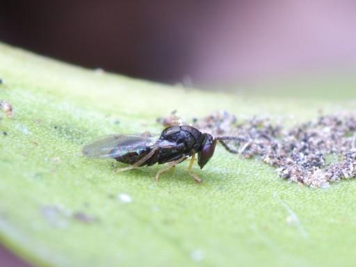 ハチの仲間4_1101162