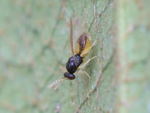 ハチの仲間_1102102