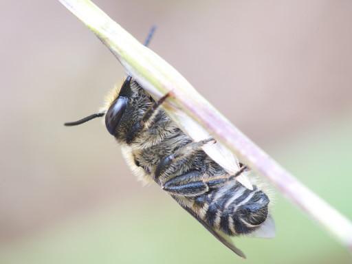 ハチの仲間_1107032