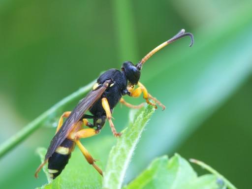 ハチの仲間_1107071