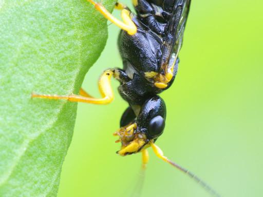 ハチの仲間_1205043