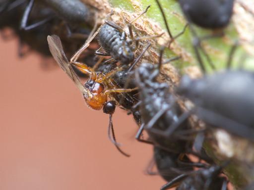 ハチの仲間_1210282