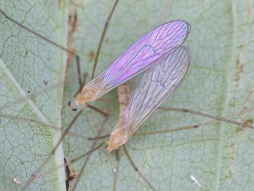 Gaganbo_19111202