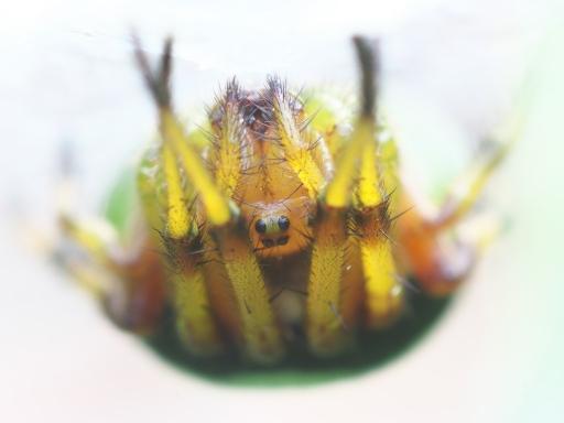 Onigumo_20120101