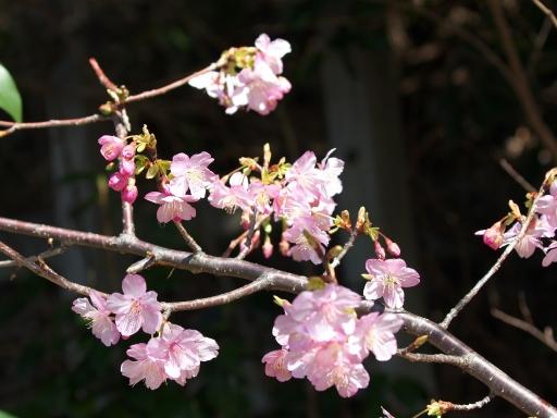 Sakura_20020101